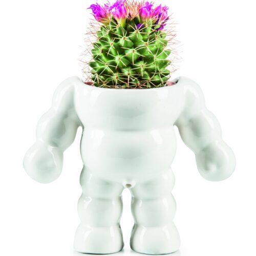 King Cactus – Plant Pot
